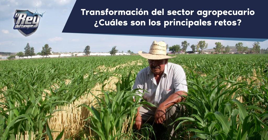 sector-agropecuario